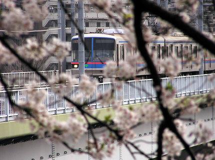 丸子橋三田線桜