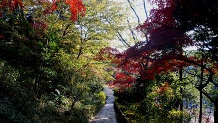 多摩川の公園