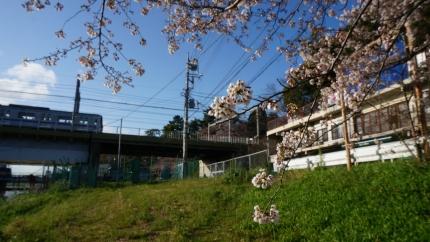 多摩川の春