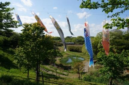 成田 さくらの山公園 :京成