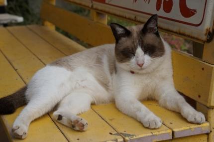 銚子電鉄 君ヶ浜駅の猫