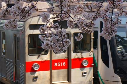 長津田検車区の桜