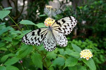 多摩動物公園昆虫館