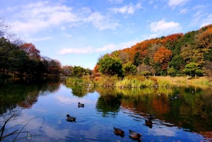 じゅんさい池から真間山弘法寺