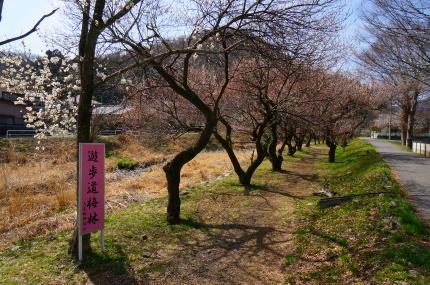 高尾梅郷・遊歩道梅園