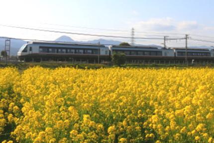 小田急線と菜の花