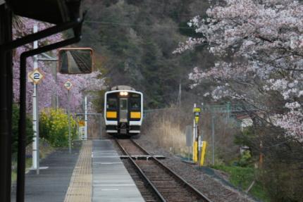 矢祭山公園の桜を背景に
