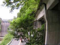 トンネル出口の橋